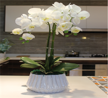 装饰花--白色蝴蝶兰